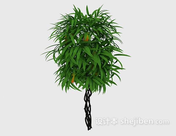 藤蔓装饰植物