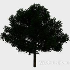 庭院大树3d模型下载
