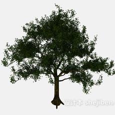 公园大树3d模型下载