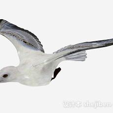 白色鸽子3d模型下载