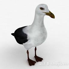 灰白双色鸟类3d模型下载