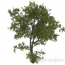 椭圆形树叶树木3d模型下载