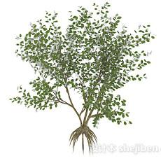 椭圆形小叶字灌木树3d模型下载