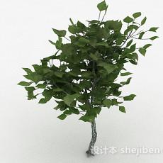 绿色树叶观赏植物3d模型下载