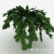 倒卵形树叶观赏植物3d模型下载