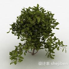 圆形树叶家庭观赏型树木3d模型下载