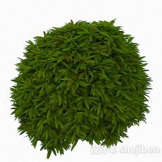 低矮绿色植物3d模型下载