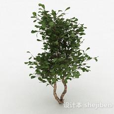 绿色圆形树叶家庭观赏型树3d模型下载