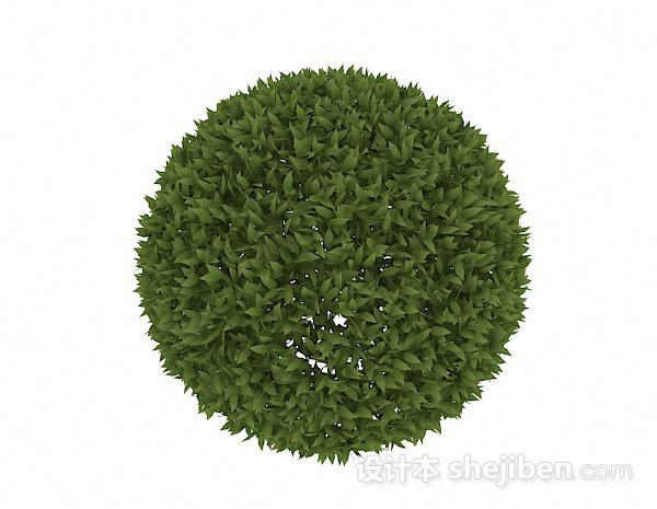 披针形叶子球状造型