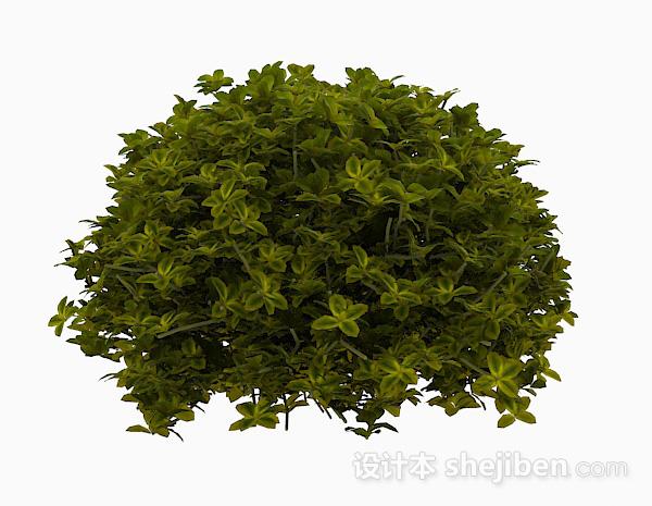 嫩绿色椭圆形叶子灌木