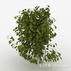 倒卵形树叶树苗3d模型下载