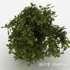 绿色圆形树叶观赏型树木3d模型下载