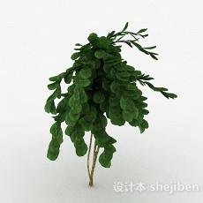 倒卵形树叶景观植物3d模型下载