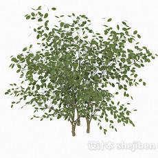椭圆形树叶灌木丛3d模型下载