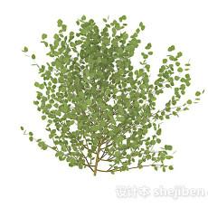 卵型叶子灌木3d模型下载