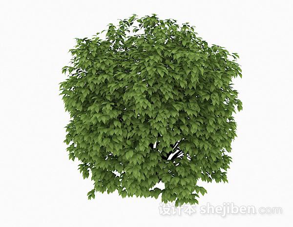 椭圆形嫩绿色公园灌木丛