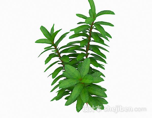 细长型叶子植物