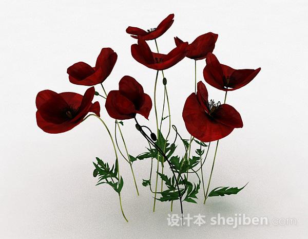 室内装饰红色花卉植物