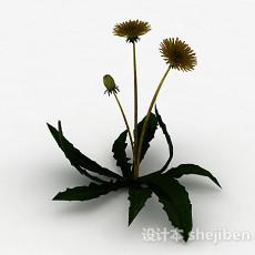 单株蒲公英3d模型下载