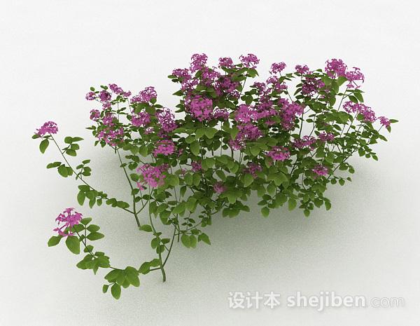 室外紫色装饰花卉
