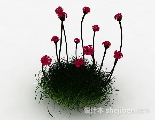 红色海石竹花卉模型