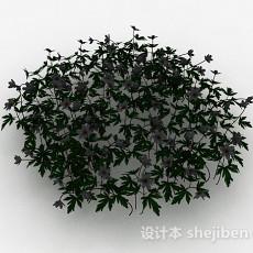白色花朵观赏花卉3d模型下载