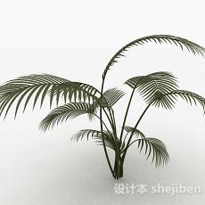 高大蕨科类植物3d模型下载