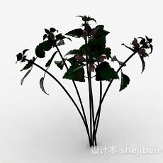 绿色草本植物3d模型下载