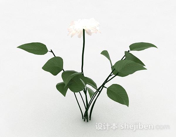 白色室外花卉植物