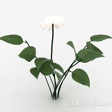 白色室外花卉植物3d模型下载