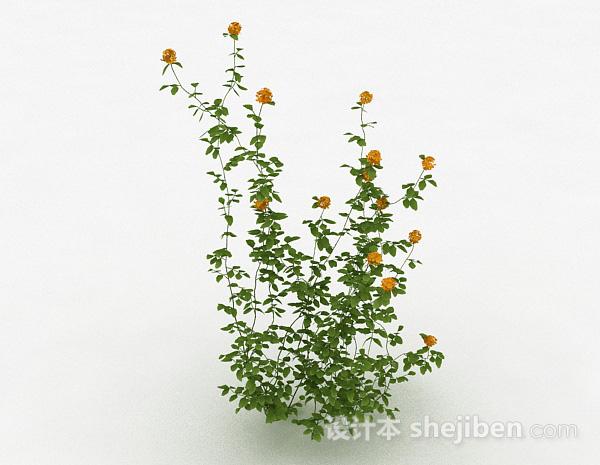室外黄色花卉植物