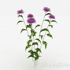 紫色装饰花卉3d模型下载