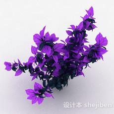 双色叶子观赏植物3d模型下载