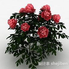 红色牡丹3d模型下载