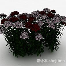 双色小花观赏型植物3d模型下载